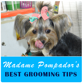 best-grooming-tips